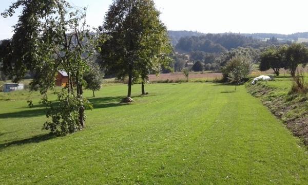 Vrbno p. Pradědem-trávník 1.měsíc po založení výsevem