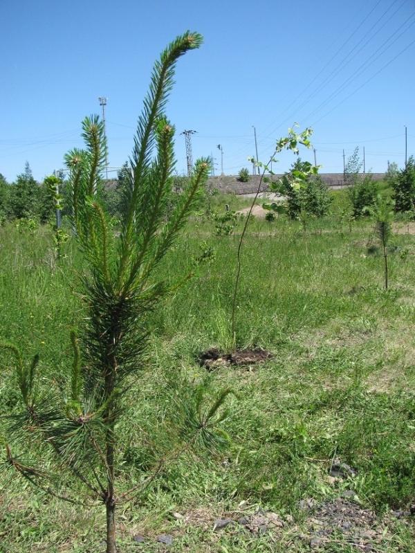 Údržba zelěně a zahrad
