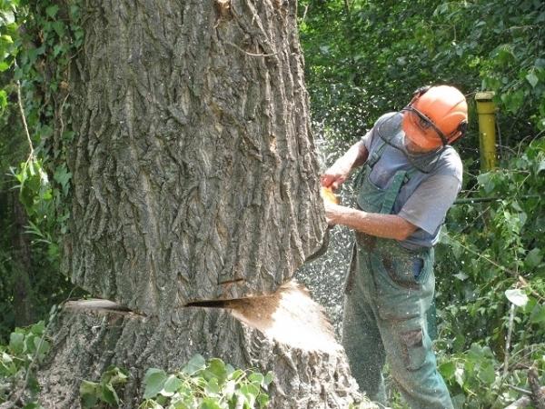 Údržba zeleně, kácení stromů